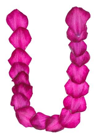 Pink Clematis petals forming letter U Reklamní fotografie