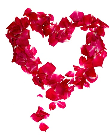 Pink rose petals forming heart on white photo
