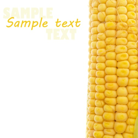 Yellow corn on white (with sample text) Stock Photo - 10315780