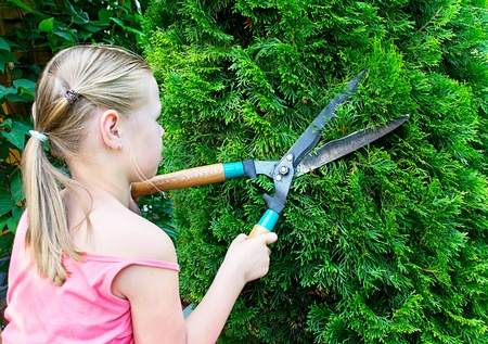 Girl cuts green bush with scissors photo
