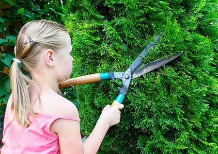 bush trimming: Girl cuts green bush with scissors Stock Photo