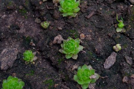 rejuvenated: Green rejuvenated on the ground