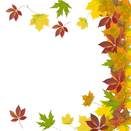 autumn leaves Stock Photo - 10791091
