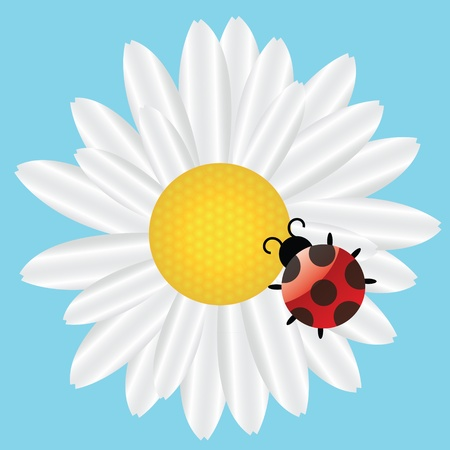 Ladybird on Daisy on blue background illustration