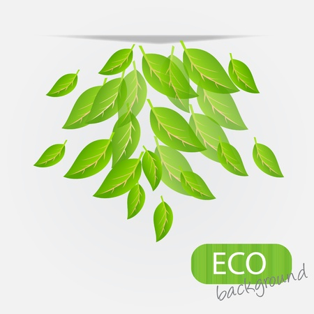 biologic: eco leves background. vector illustration Illustration