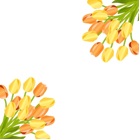 Floral background with tulips Stock Vector - 11845011