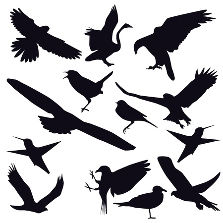 Set of different photographs of birds isolated on white background Vector