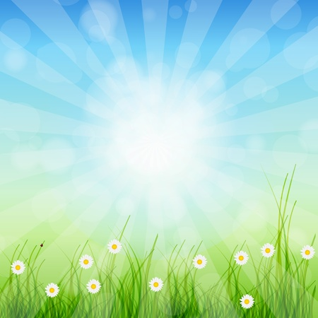 Summer Abstract Background with grass and chamomile against sunny sky illustration  Stock Vector - 12909837