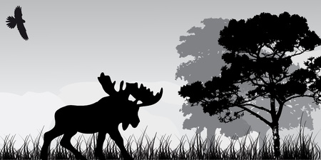 rain forest: silhouette of elk and tree