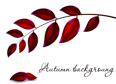 autumnally: Autumnal leaf background, illustration