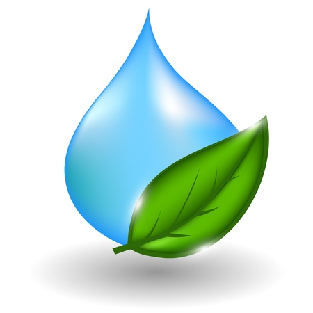leaf water drop: water drop with green leaves.illustration Illustration