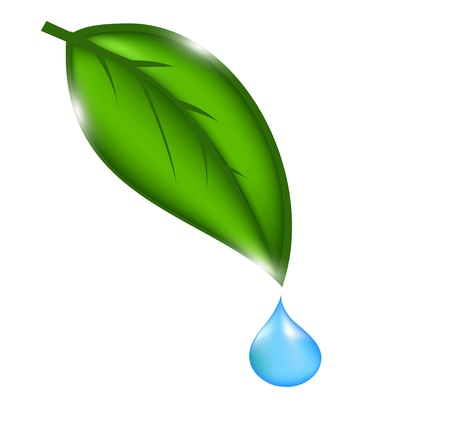 drops of water: water drop with green leaves.illustration Illustration