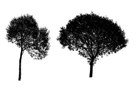 arbol alamo: siluetas de �rboles