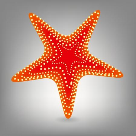 stella marina: Stella di mare Vettoriali