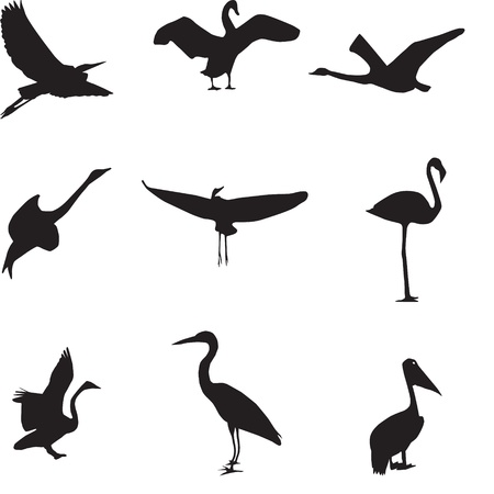 Set of different photographs of birds seamless pattern Stock Vector - 16116212