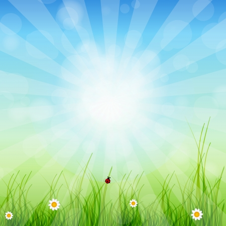 Spring green background  Grass and sun photo