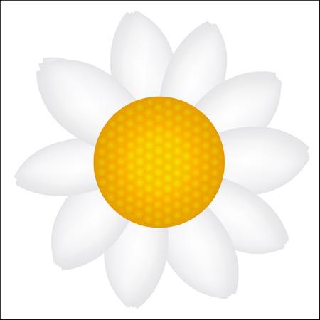 Beautiful Daisy icon vector illustration Stock Vector - 17596611