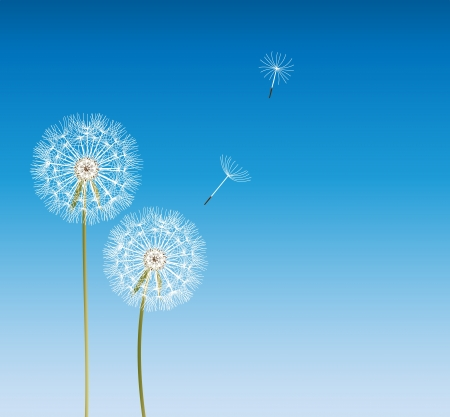 abstract dandelion background  vector illustration Vector