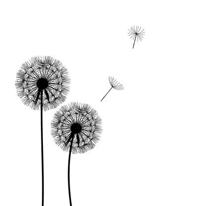 dandelions: abstract dandelion background