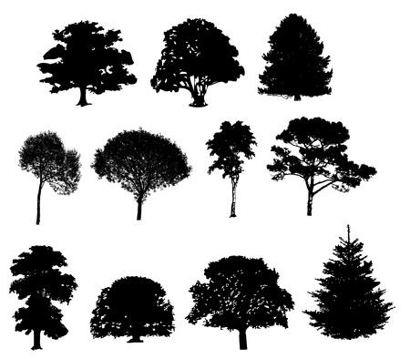 foglie di quercia: Illustrazione vettoriale di sagome di alberi Vettoriali