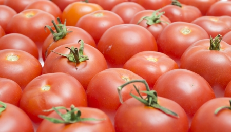 Red tomatoes isolated on a white background Stock Photo - 22773765