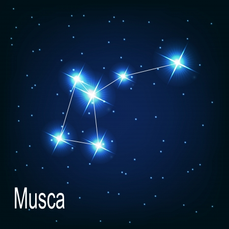 starbright: The constellation Musca star in the night sky. Vector illustration