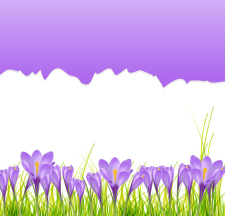 Vector illustration crocus flower background Vector