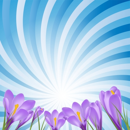 Vector illustration crocus flower background Stock Vector - 23476059