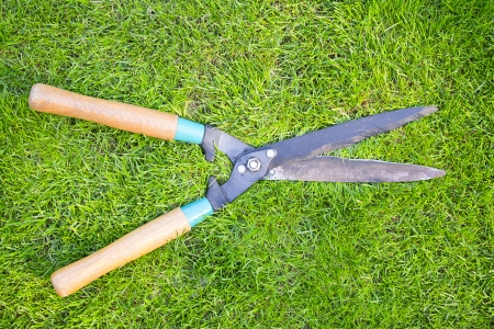 Clippers on the green grass Stock Photo - 25096030