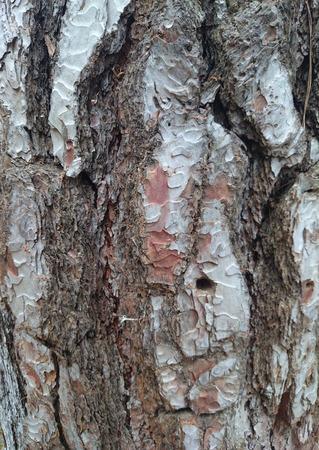 Trunk Wood Background Photo photo