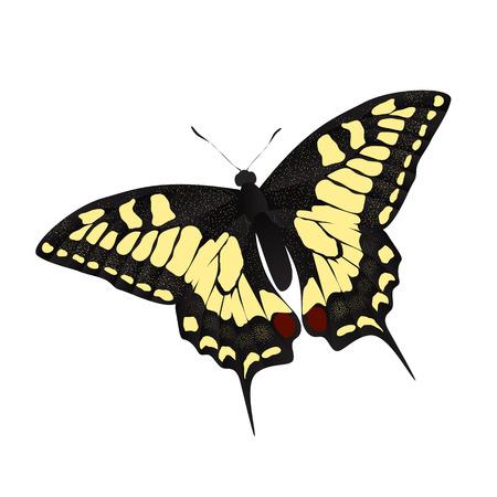 hairy legs: Butterfly Vector Illustration