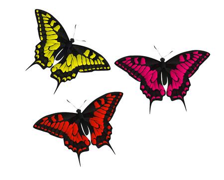 feeler: Butterfly Vector Illustration