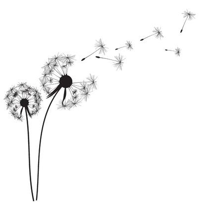 Abstract Dandelion Background Vector Illustration   Illustration