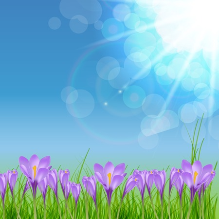 green flowers: Happy Easter Card with Crocuses Vector Illustration EPS10