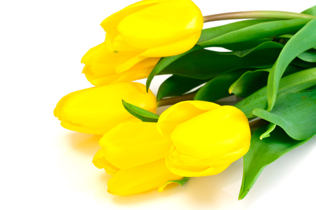 loveliness: Beautiful Yellow tulips Isolated on White Background