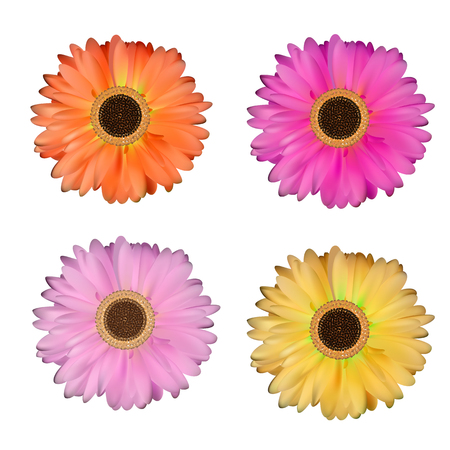 head shot: Gerbera Flower Set White Background Vector Illustration EPS10