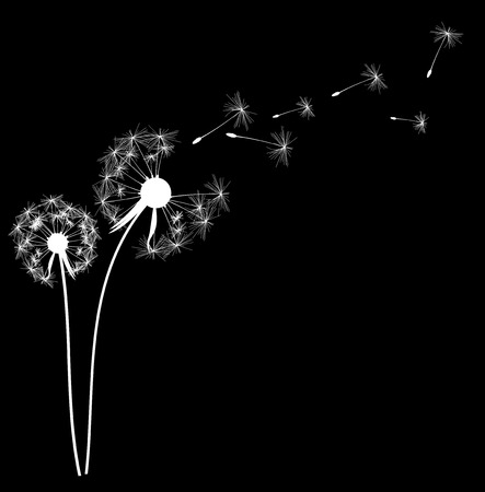 dandelion abstract: Abstract Dandelion Background Vector Illustration EPS10
