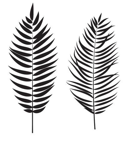 feuille arbre: Palm Tree Silhouette Feuille isolé sur fond blanc vecteur Illustration