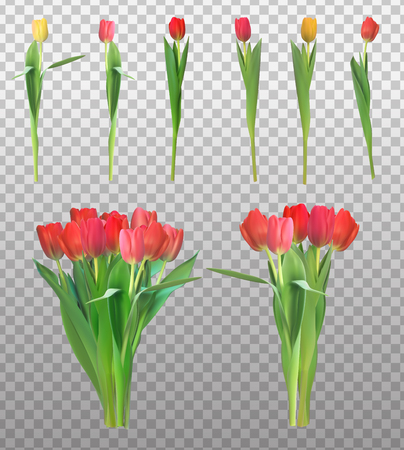 Realistic Vector Illustration Colorful Tulips Collection Set . N