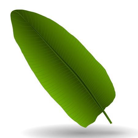 Colorful naturalistic palm leaf. Illustration