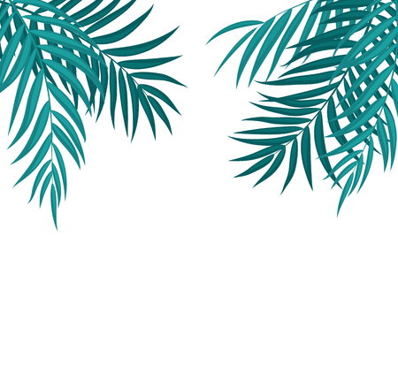 Beautifil Palm Tree Leaf Silhouette Background Stock Photo