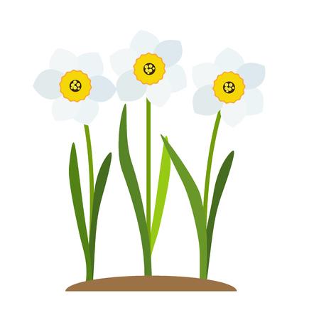 Spring Narcissus Flowers Background Vector Illustration EPS10 Illusztráció