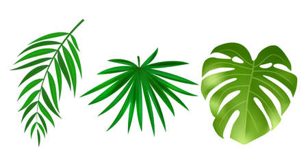 Monstera and palm green leaves isolated on white background. Vector Illustration Vector Illustration