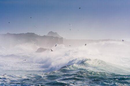 Aves marinas jugando con enormes olas. Foto de archivo