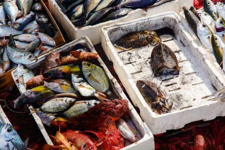 Freshly fished mediteranean fishes