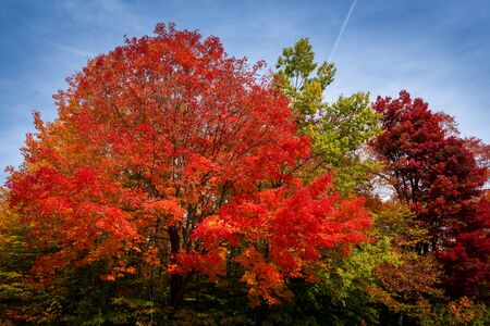 Different colors from trees found in new england Standard-Bild