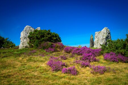Menhirs and purple flower typical of Breton heather