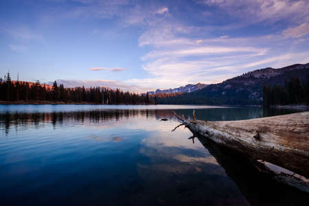 Log on the shore of Horseshoe lake in Mammoth mountains area