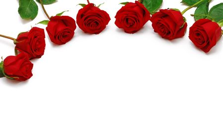 Red roses for the greetings. Stock Photo