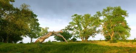Evening. Trees. Beautiful panoramic view. Stock Photo